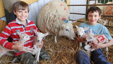 Elliott and Albion Denton-Cardew with Emma and her new lambs Picture: TIM DENTON-CARDEW