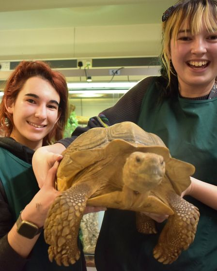 Students Megan Marriott and Teigan Glastonbury with Bowser the giant tortoise who lives at Suffolk R