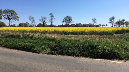 An oilseed rape field in mid Suffolk in spring 2020 Picture: SARAH CHAMBERS