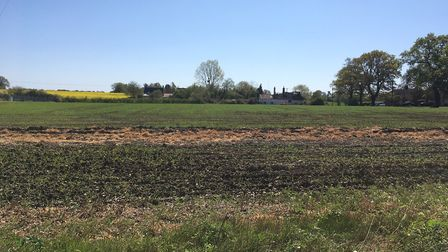 A crop field in Mid Suffolk in April 2020 Picture: SARAH CHAMBERS