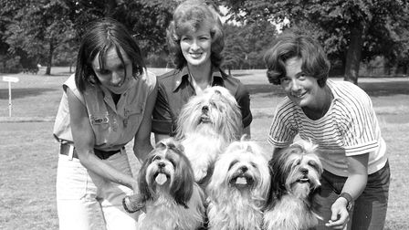 Four dogs were getting pampered before the dog show Picture: IVAN SMITH