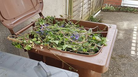 West Suffolk gardeners will get their brown bins emptied again from June. Picture: PAUL GEATER