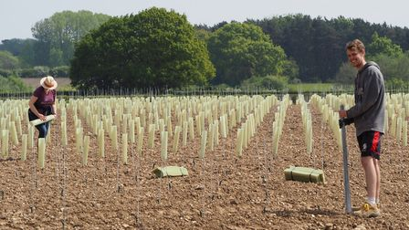 Tom Bunting Vineyard Management's Vine Army Picture: TBVM