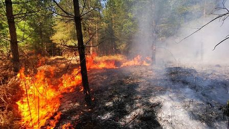 Crews were called to deal with a blaze near in Thetford Forest Picture BRANDON FIRE STATION