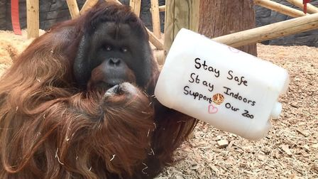 Tiga and his 'stay home' message Picture: Colchester Zoo