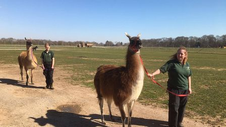 The zoo's Animal Care Team working hard to look after the animals Picture: Colchester Zoo