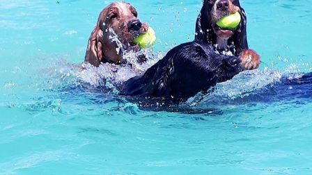 Some happy dogs enjoying a swim Picture: Jo Allen / Canine Dip and Dive