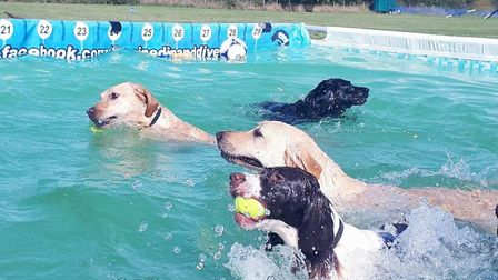 Some of Canine Dip and Dive's faithful clientele Picture: Jo Allen / Canine Dip and Dive