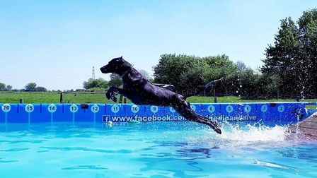 One of the dogs making a majestic leap off the diving ramp Picture: Jo Allen / Canine Dip and Dive
