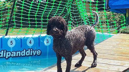 A dog testing the waters before jumping in Picture: Jo Allen / Canine Dip and Dive