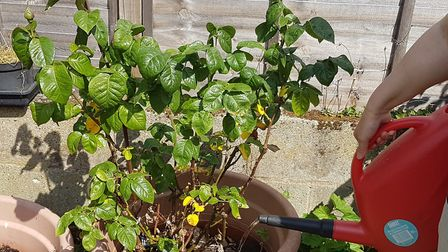 Gardeners will have to keep on making sure their plants are kept watered. Picture: PAUL GEATER