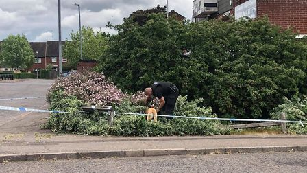 Police have been seen searching nearby bushes Picture: JAKE FOXFORD