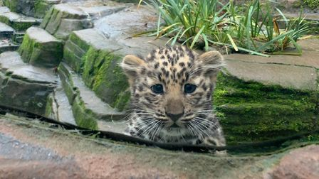What measures will Colchester Zoo be implementing for its reopening? Picture: ARCHANT