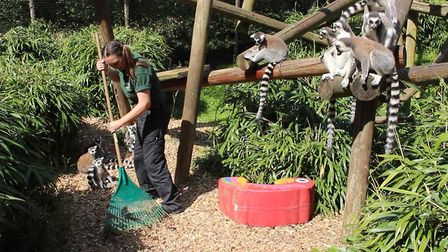 What measures will Colchester Zoo bring in when they reopen after lockdown? Picture: Colchester Zoo