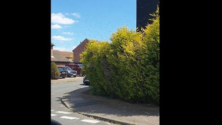 A swarm of bees descended on a street corner in Needham Market, prompting residents to seek shelter.