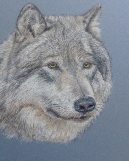A portrait of one of the wolves from Yellowstone National Park Picture: ANNE BUNYAN
