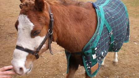 Bridie the pony, who has died aged 32, is fondly remembered by the Woodbridge and District Riding fo