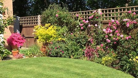 Patricia Price has spent three years working on this small garden at her home in Combs Ford, near St
