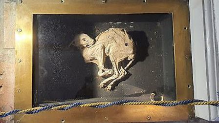 The mummified cat which is on display in the hotel's main reception area Picture: The Mill Hotel