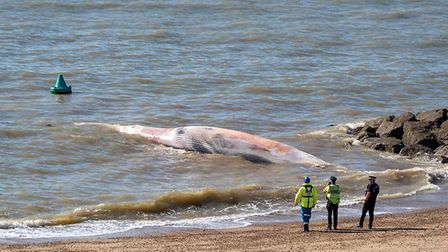 A 40ft whale has washed up on Clacton beach this morning. Picture: BIG BLUE OCEAN CLEANUP