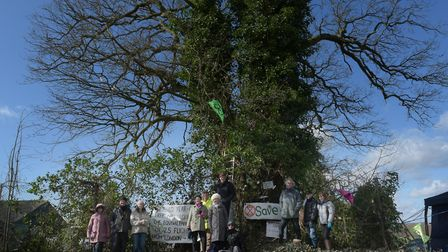 Extinction Rebellion protestors began protecting a number of oak trees in Ixworth in March Picture: