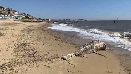 The remains of the baby whale on Southwold beach. Picture: SIMON TOBIN