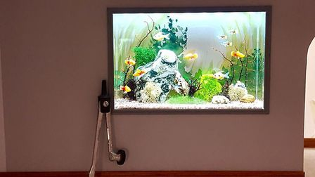 A tiny built-in aquarium, with a compass for scale Picture: Emma Waddell