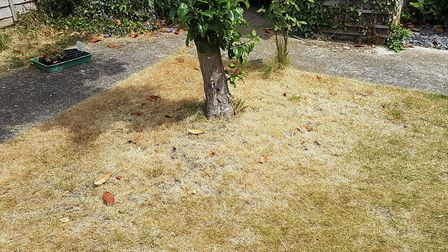Anglian Water wants to see brown grass at the moment. Picture: PAUL GEATER