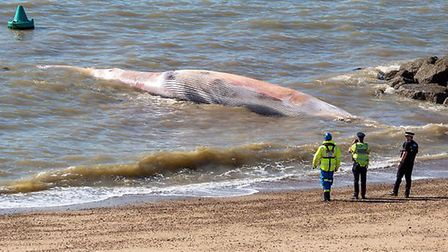 The 40ft whale washed up on Clacton beach on Friday and was removed over the weekend. Picture: BIG B