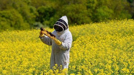Beekeeper Arlen Mulder tends to the bees used as pollinators on the oilseed rape crop at Hillfarm Oi
