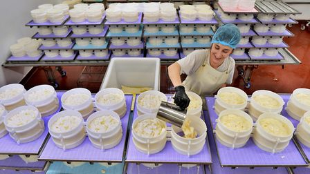 Pouring whey during the cheese-making process at Fen Farm Dairy near Bungay, where Baron Bigod chees