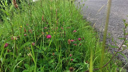 Roadside Nature Reserves are dotted across Suffolk's road network Picture: ROSS BENTLEY