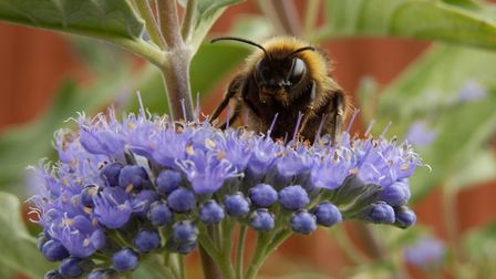 A 'pollen bomb' has been forecast across Suffolk and north Essex Picture: JANICE POULSON