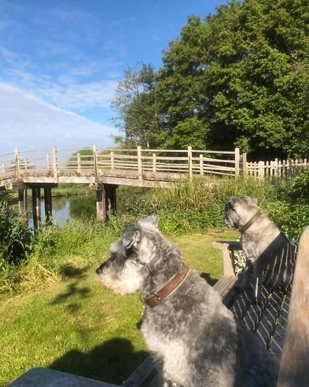 Mister Noodles and Wilfred Humphrey looking out at Flatford Bridge in Constable Country. Picture: GR