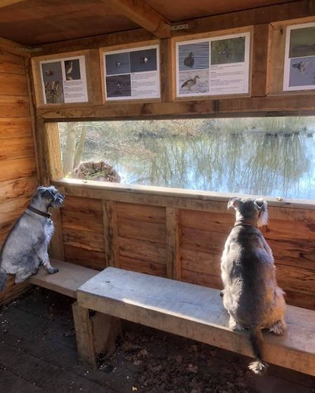A spot of bird watching in the bird hide at Flatford. Picture: GRAHAM REED