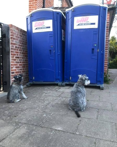 The boys queuing for the portable toilets in East Bergholt, where road works are underway. Picture: