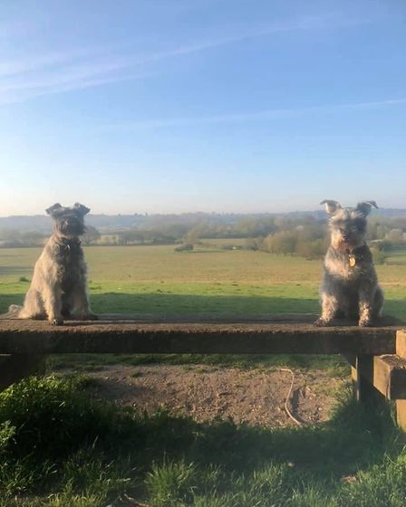 On Sheep Hill bench, looking out at the view of Constable Country. Picture: GRAHAM REED