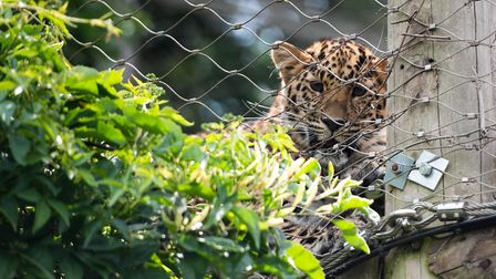 Colchester Zoo opened it's gates for the first time in months Picture: SARAH LUCY BROWN