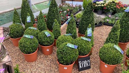 A selection of potted topiary Picture: The Potting Shed
