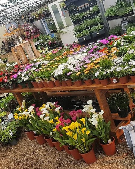 Gorgeous flowers in bloom, ready to be taken to their new homes Picture: The Potting Shed