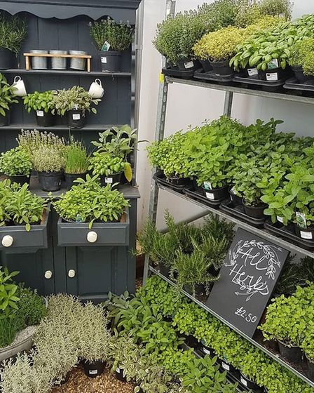 An assortment of vibrant green herbs Picture: The Potting Shed