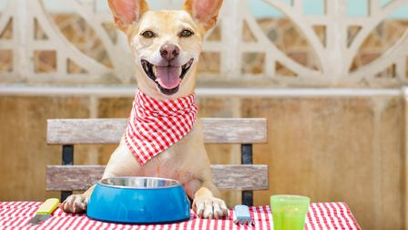 A diner complained on Tripadvisor for being asked to remove their dog from the table Picture; Getty