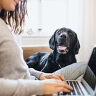 Pets are loving spending more time with their owners, now that a lot of people have been working fro