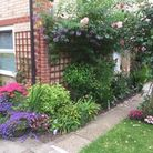 The judging is taking place from Monday, July 13, for a week Picture: BURY IN BLOOM
