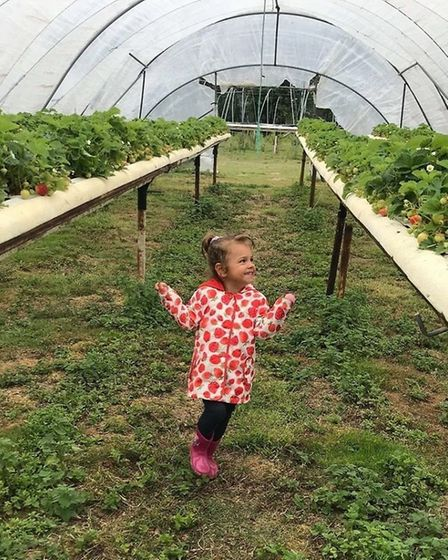Elmira, aged three, wearing a strawberry coat at Goslings Farm Shop Picture: DAVID GILLINGWATER