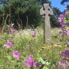 Tall grasses and wild flowers in churchyards will be the shape of things to come Picture: RICHARD CO