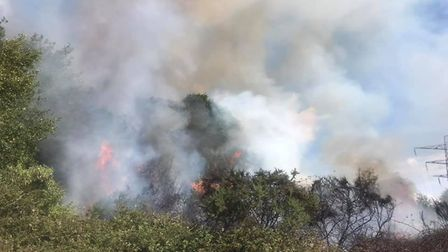 Firefighters have been battling the blazes in Friday Wood Green, near Colchester. Picture: NICKY COL