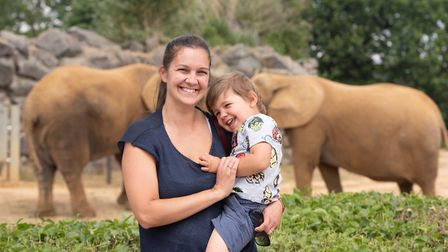 Colchester Zoo is now able to let families feed their elephants and giraffes Picture: SARAH LUCY BRO