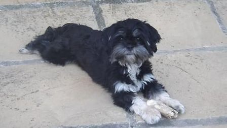 The dogs were stolen by intruders who climbed over the back fence of the Tuddenham Road kennels. Pic