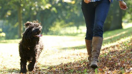 There have been warnings about dog thefts in Suffolk. Stock picture. Picture: PA